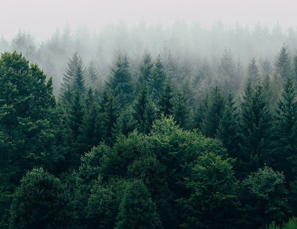 Foresta con aria di montagna, fresca e pulita - Mac Costruzioni Generali